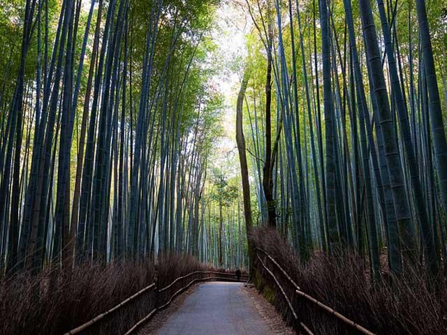 Bamboo Forest of Arashiyama, Japan