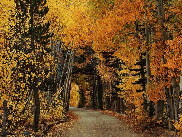 Leaf Tunnel, California, USA