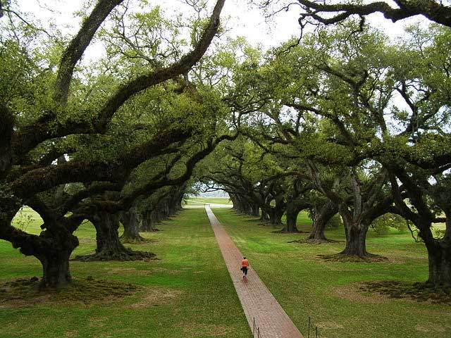 Oak Alley, Louisiana, USA