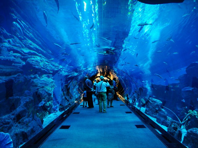 20 Amazing Aquariums You Have to Visit
