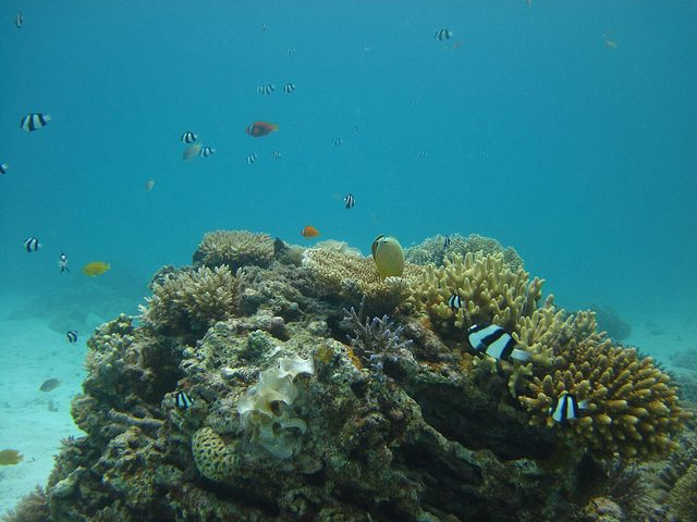 10 Most Endangered Coral Reefs