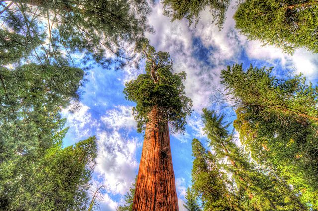 10 Massive Trees You Can Climb