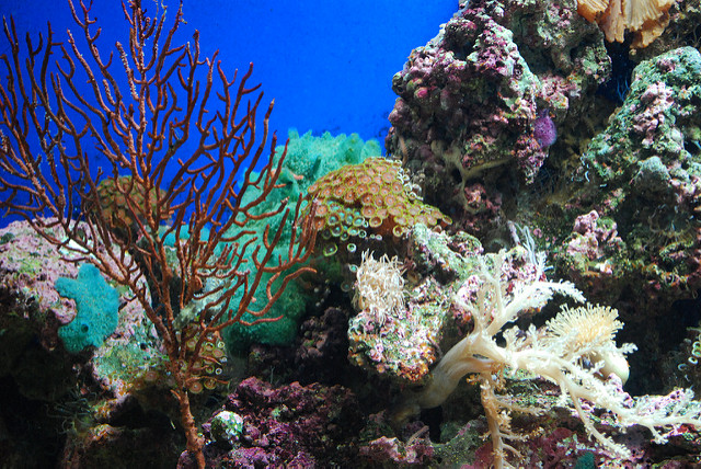 Reunion Island's Coral Reef