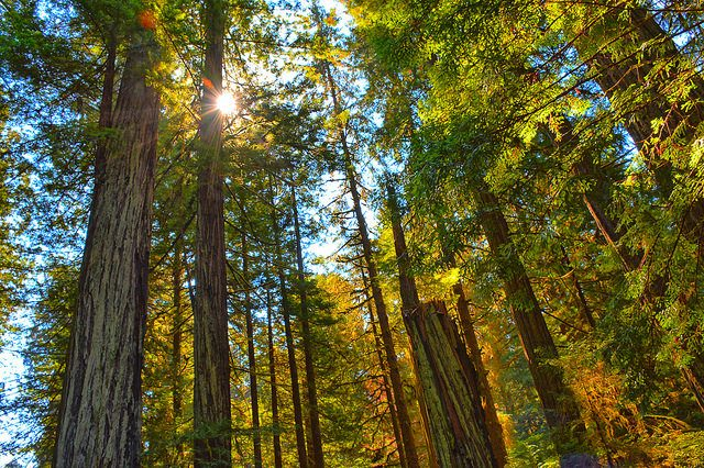 12 Amazing Old Growth Forests