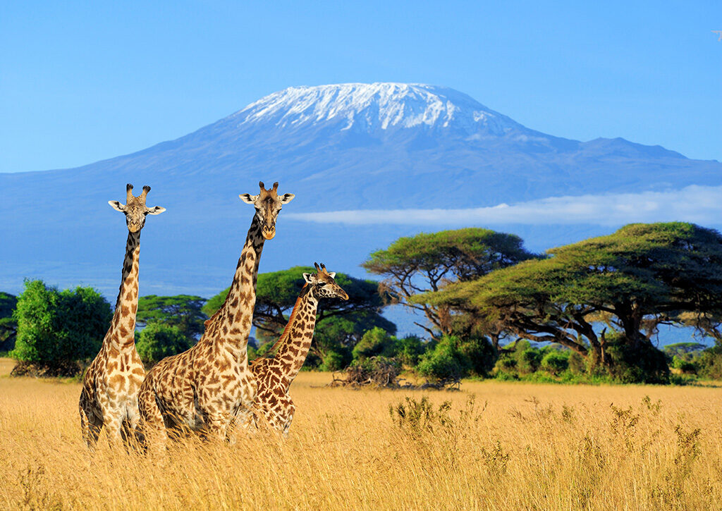 Mount Kilimanjaro from national Park of Kenya